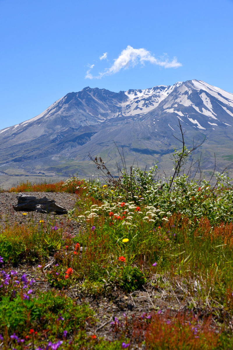 mt saint helens and the carbon dating test